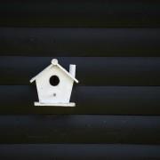 Vogelhäuschen vor schwarzer Wand